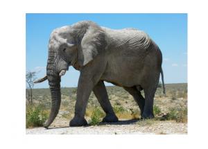 Big-Elephants-can-always-use-small-envelopes